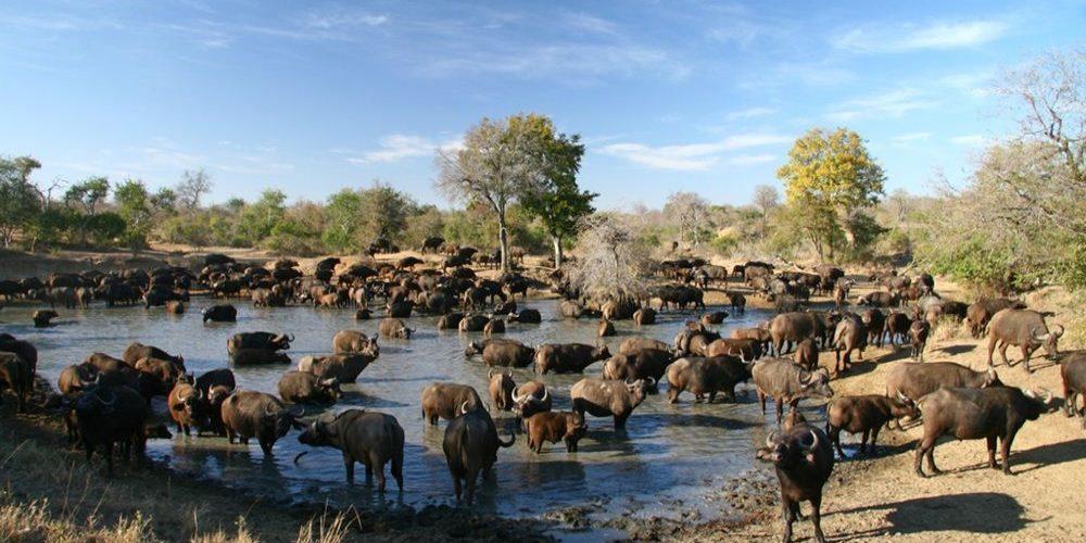 Greater Kruger National Park - Adventure To Africa